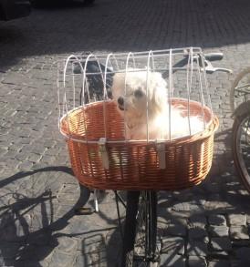 cesto cane
